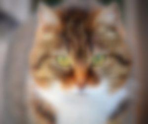 Processing Filtro Blur
